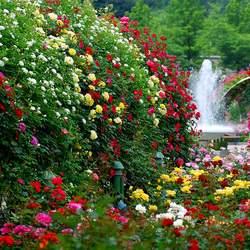 Пазл онлайн: Любимый сад