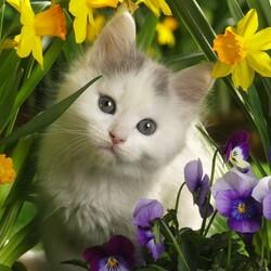 Пазл онлайн: Котенок в цветах