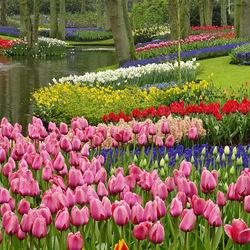 Пазл онлайн: Голландский парк Кёкенхоф
