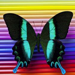 Пазл онлайн: Бабочка и цветные карандаши
