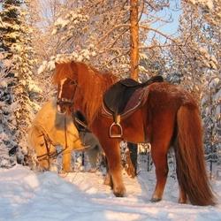 Пазл онлайн: Снежная зима