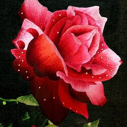 Пазл онлайн:  Роза с каплями росы