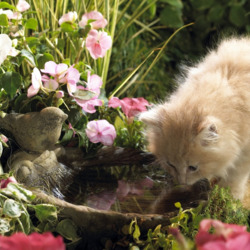 Пазл онлайн: Водопой