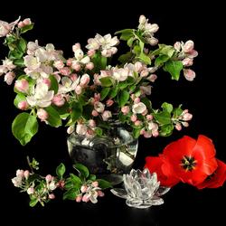 Пазл онлайн: Цвет яблони