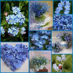 Пазл онлайн: Цветение синего