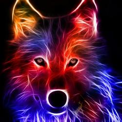 Пазл онлайн: Волк