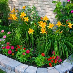 Пазл онлайн: Цветы на клумбе