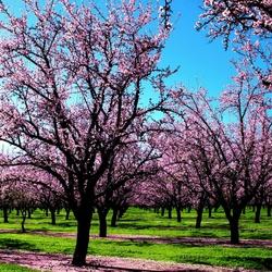 Пазл онлайн: Весна в воздухе