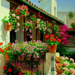 Пазл онлайн: Великолепие цветущего сада