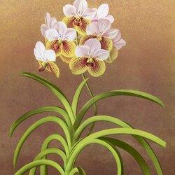 Пазл онлайн: Орхидея ванда