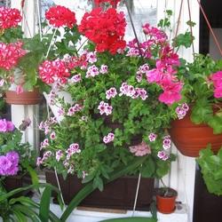 Пазл онлайн: Цветущее лето