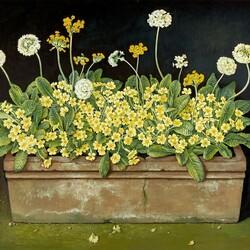 Пазл онлайн: Дикие первоцветы
