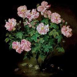Пазл онлайн: Бело - розовый куст