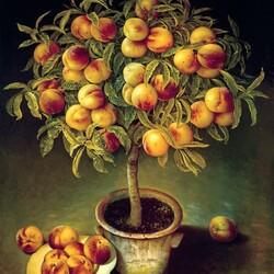 Пазл онлайн: Персиковое дерево