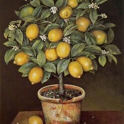 Пазл онлайн: Лимонное дерево