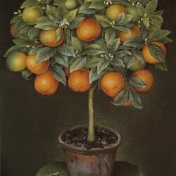Пазл онлайн: Апельсиновое дерево в керамическом горшке