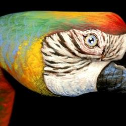 Пазл онлайн: Чудо-попугай