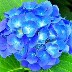 Пазл онлайн: Небесно-голубой