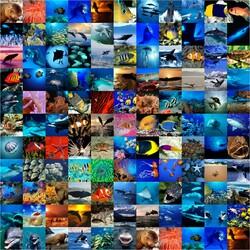 Пазл онлайн: Красоты морских глубин