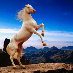 Пазл онлайн: Белый красавец