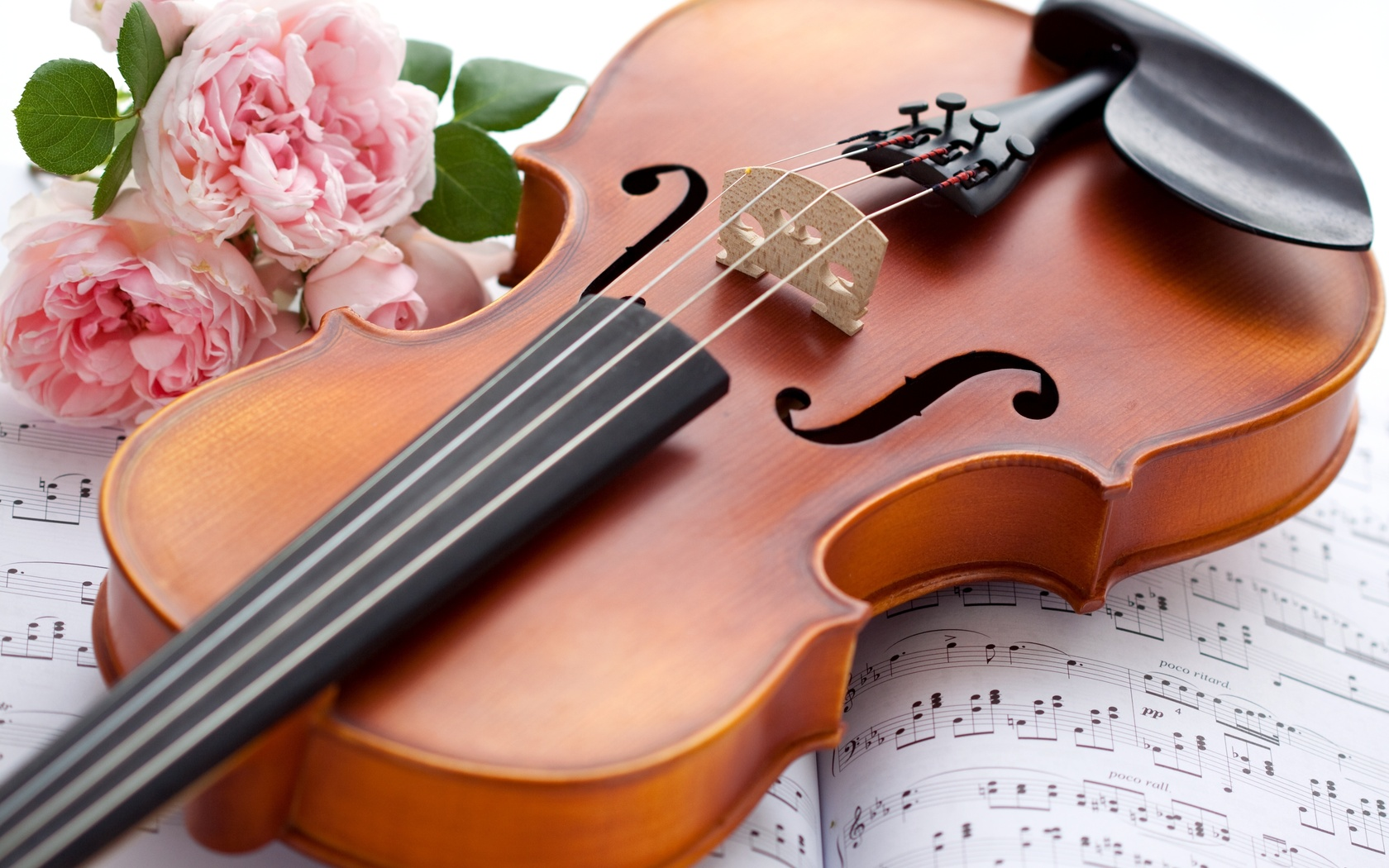 картинки скрипичные мастера