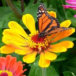 Пазл онлайн: Собирая нектар