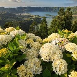 Пазл онлайн: Вид на озеро
