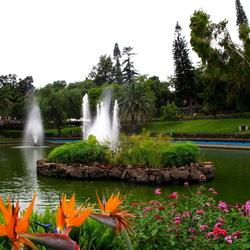 Пазл онлайн: Садовый пруд