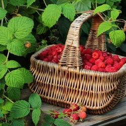 Пазл онлайн: Сладкие ягоды