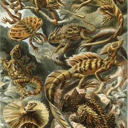 Пазл онлайн: Ящерицы (Lacertilia)