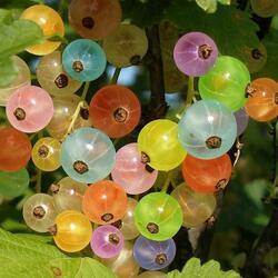 Пазл онлайн: Разноцветная смородина