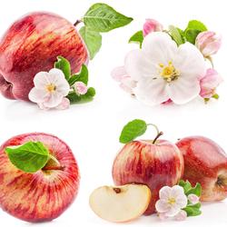Пазл онлайн: Аромат яблок