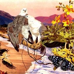 Пазл онлайн: Белобрюхий орлан