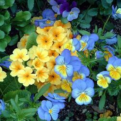 Пазл онлайн: Весеннее разноцветье