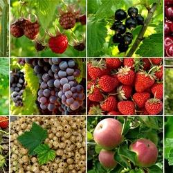 Пазл онлайн: Вкус и аромат лета