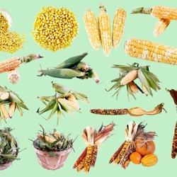 Пазл онлайн: Кукуруза