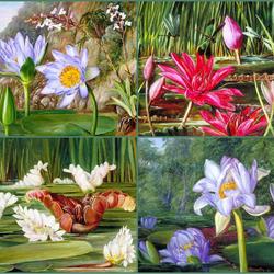 Пазл онлайн: Водяные растения. Галерея Марианны Норт