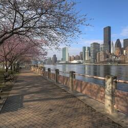 Пазл онлайн: Сакура на набережной,Нью-Йорк, США