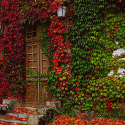 Пазл онлайн: Дом, где живет осень