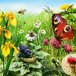 Пазл онлайн: Цветы и насекомые