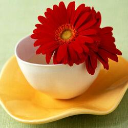 Пазл онлайн: Чашка и цветок