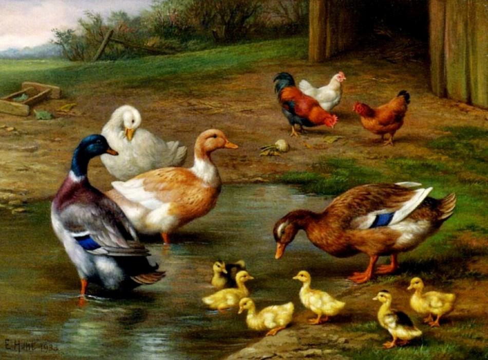 картинки птичий базар в деревне цвета немного размыты