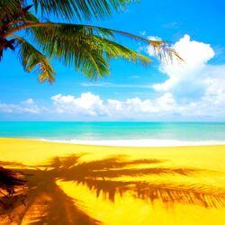 Пазл онлайн: Пальма, море, пляж, песок.....