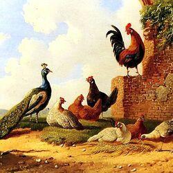 Пазл онлайн: Birds Sun \ Птицы греются на солнце