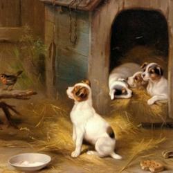Пазл онлайн: Любознательный щенок