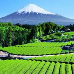 Пазл онлайн: Гора Фудзи