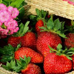 Пазл онлайн: Цветы и клубника