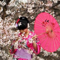 Пазл онлайн: Сакура цветет