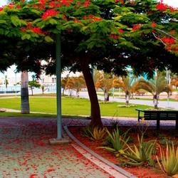 Пазл онлайн: Парк Лас-Пальмас-де-Гран-Канария, Испания