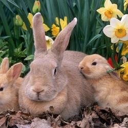Пазл онлайн: Кролики в саду